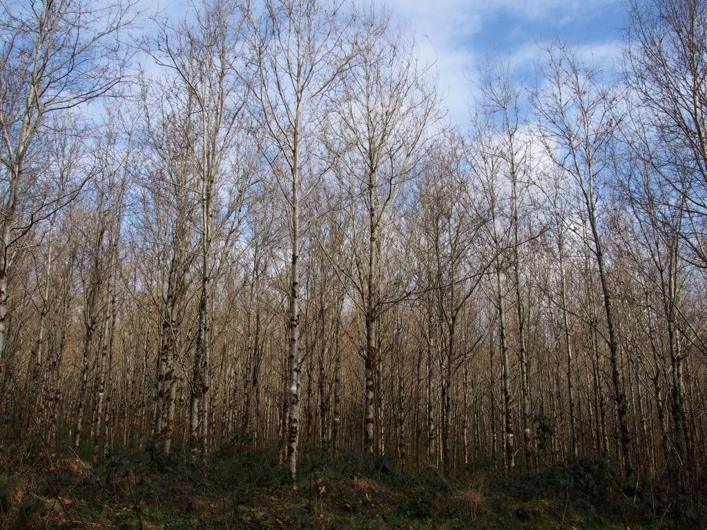 Ireland forest