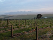 Winelands of South Africa